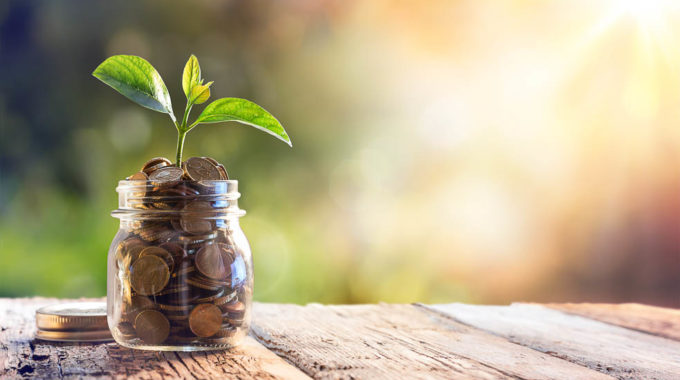 Plant Growing In Savings Coins – Investment And Interest Concept